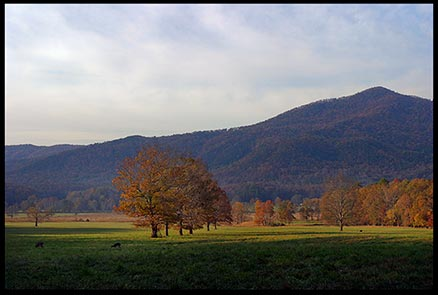 Fall trees in autumns colors surrounded by mountains in Cades Cove, Great Smoky Mountains National Park