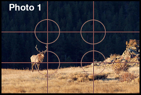 This illustration of the rule of thirds is a Bull elk walking across Moraine Park in Colorado's Rocky Mountain National Park.