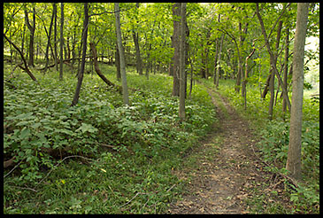A path through a green tree filled Fontenelle Forest in Nebraska.