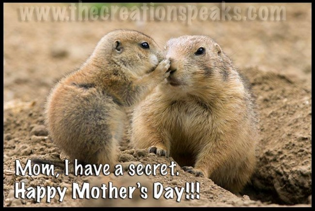 "Bible verse of the Day Happy Mother's Day. Proverbs 31:28, ""Her children rise up and bless her; Her husband also, and he praises her."" Prairie Dog pup and mother."