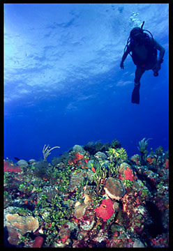 The silhouette of a scuba diver over reef in the Bahamas