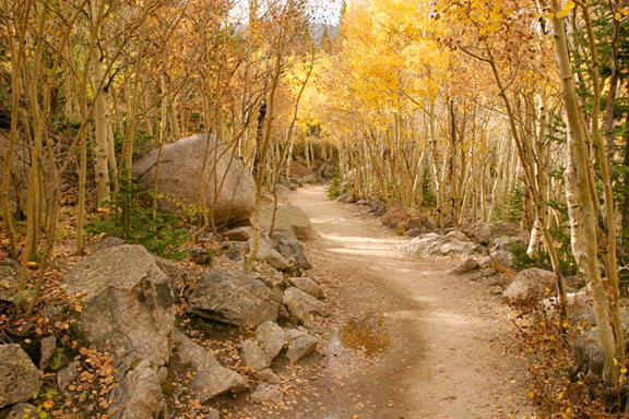 The Mills Lake Trail in Rocky Mountain Park going through a bright yellow fall aspen grove. This illustrates the photogrpahy concept of leading lines