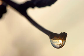A dew drop with sunrise reflected in it on a bud on the end of a branch. This illustrates the photography composition concept of leading lines