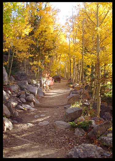 A trail lined with golden fall aspens in Rocky Mountain National Park leads to Flattop and Hallett