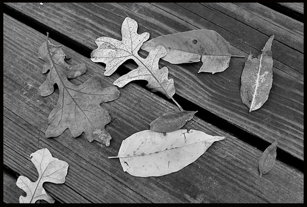 A black-and-white photo of fallen autumn leaves on a boardwalk.
