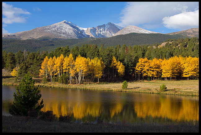 Golden yellow aspen trees display their fall colors benneath Mount Meeker and Long's Peak in Rocky Mountain National Park