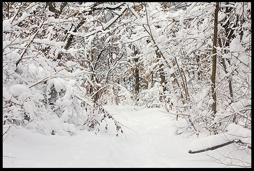 Snow covered path in Fontenelle Forest, Nebraska shows pure beauty