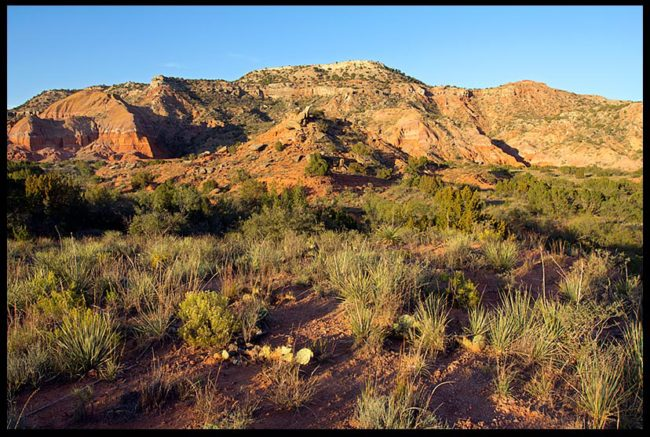 Green desert plants and and red rock land Land formations, Palo Duro Canyon, Texas and Job 38:25-27. Bible verse God satisfies