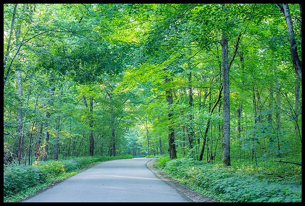 A narrow road winds through trees and the color green in Mystery Cave State Park, Minnesota