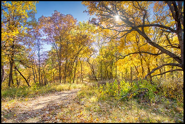 A backlit shot of yellow and orange colors of fall along a trail in Indian Cave State Park in Nebraska
