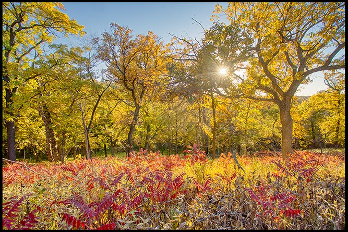 A landscape photo of red and yellow colors of fall broken up into three even horizontal sections illustrating the rule of thirds