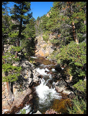 Eihter St Vrain and Ouzel Creek flowing through pine trees along the Ouzel Falls Trail in Rocky Mountain National Park