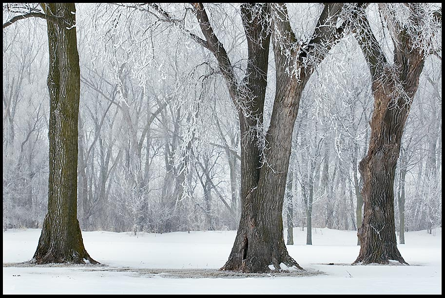 Trees covered and decorated with hoarfrost and snow in Aspen Park, Bellevue, Nebraska and Psalm 147 God's Scatter frost like ashes