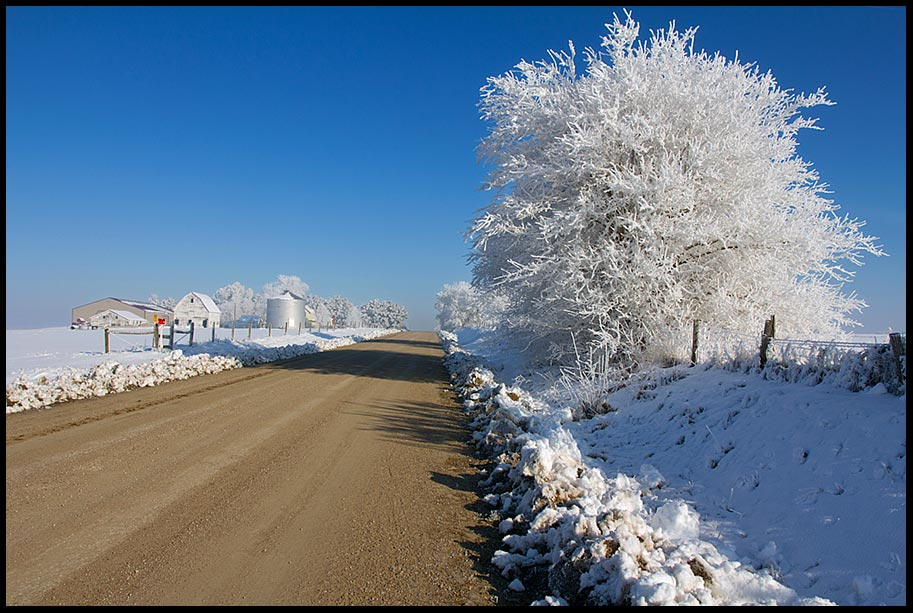 A dirt Road Through snow with a hoarfrost covered tree and blue sky, Eastern Nebraska and Isaiah 35:8 Bible verse on a Highway of Holiness