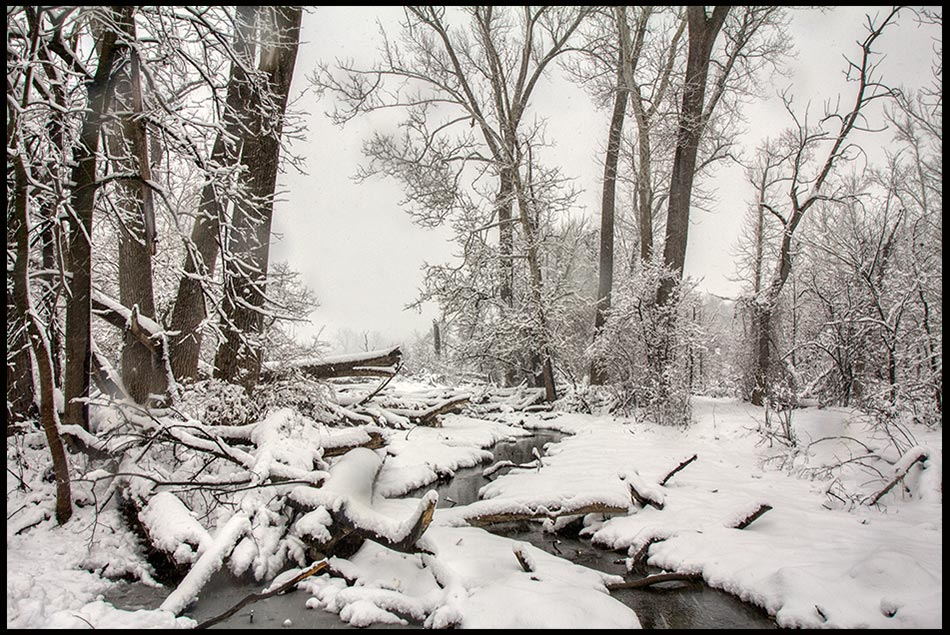 Snow covered stream and trees, Fontenelle Forest, Bellevue, Nebraska and Proverbs 22:11 Bible verse on Purity of heart