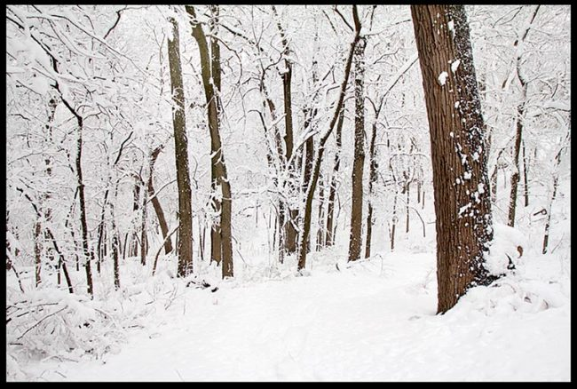 A snow covered path through snow covered woods and trees, Fontenelle Forest and Bible verse Philippians 4:8, whatever is pure.