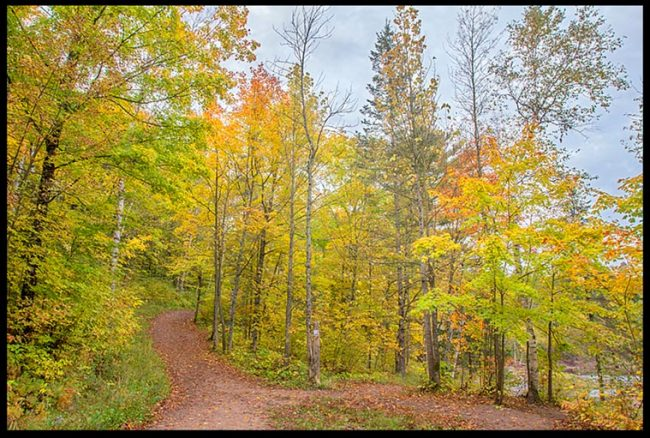 A trail through autumn trees in Jay Cooke State Park, Minnesota and Bible verse Jeremiah 32:38-39 their God