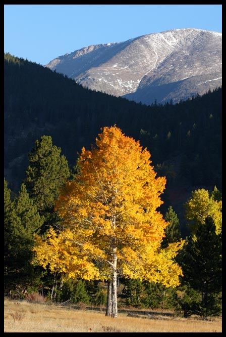 Gold fall aspen trees in front of mountain, Rocky Mountain National Park, Colorado and Job 37:22-23. awesome majesty Bible Verse of the Day:
