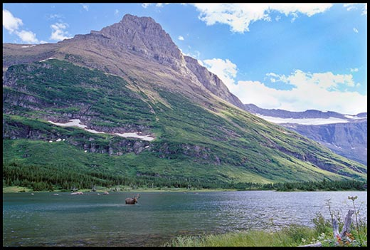 A Bull moose in Bullhead Lake dwarfed by a mountain in Glacier National Park romanced by nature