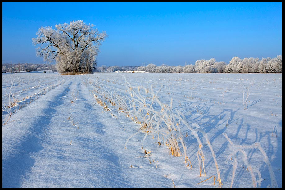 Snow and hoarfrost covered soybean field under a blue sky, Eastern Nebraska and Ecclesiastes 3:1-4 Bible verse a time for everything