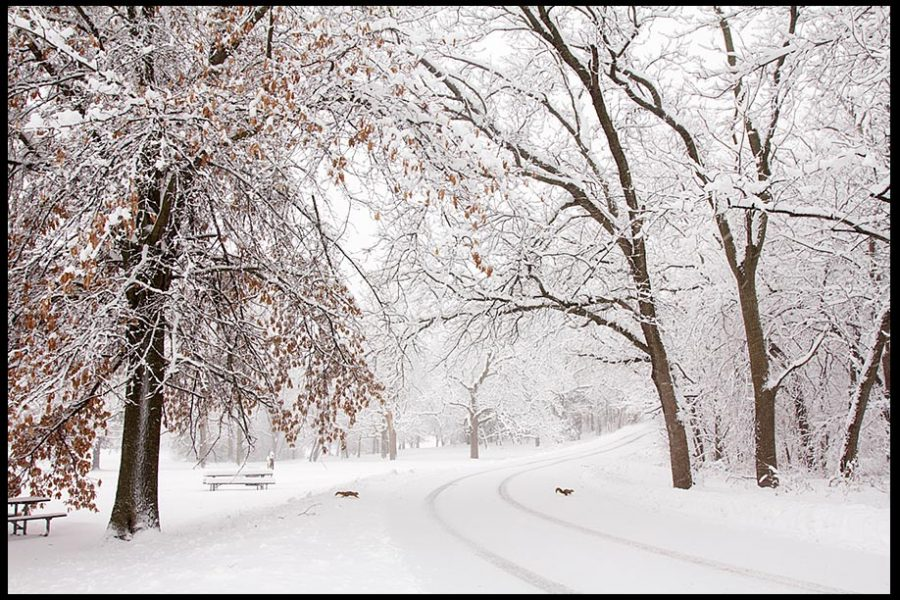 A pair of squirrels run across a road under snow tress at Seymour Smith Park, Omaha Nebraska and bible verse Psalm 25:10, God's humble paths