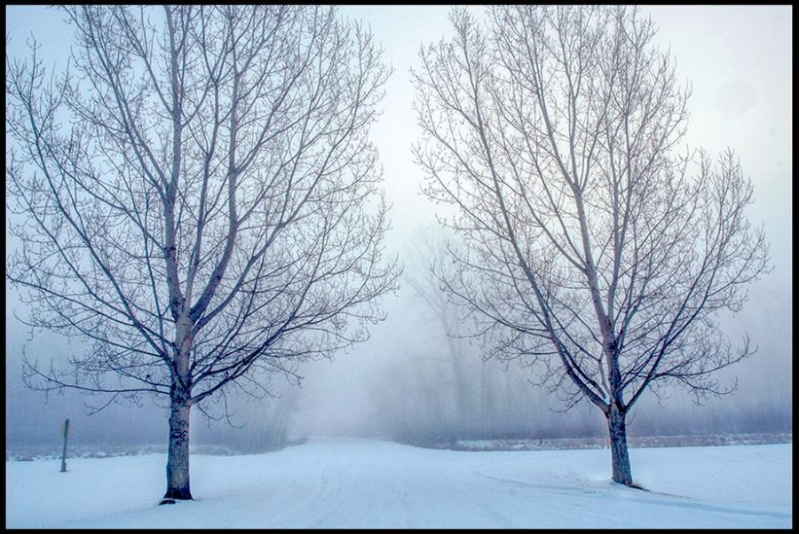 """Snow covered road through trees on a foggy morning, Lake Manawa State Park, Iowa and Proverbs 3:5-6 Bible verse """"Trust in the LORD"""