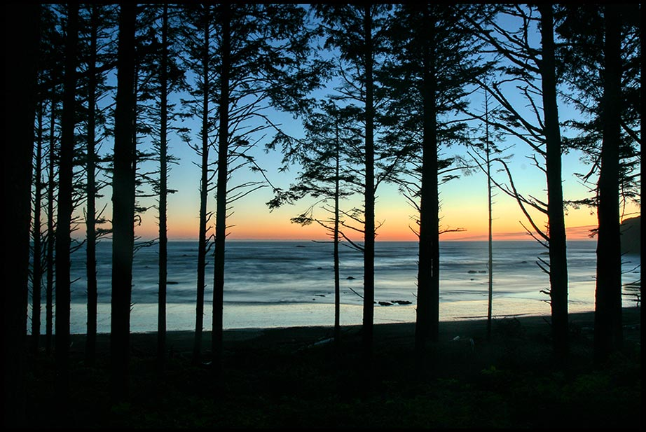 Silhouetted trees by a sunset on the Pacific Ocean, Olympic National Park, Washington State and Psalm 23:6, goodness and mercy will follow me