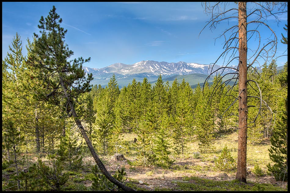 Looking through pine trees at part of the Sawatch Mountain Range, San Isabel National Forest, Colorado and Galatians 5:1, Freedom in Christ