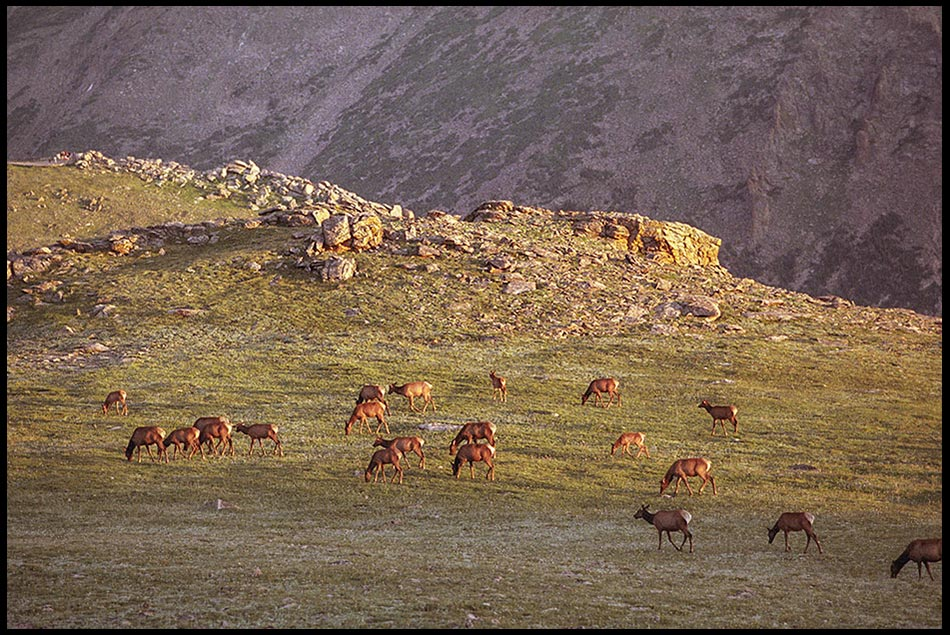 Elk grazing on a mountain plateau near Trail Ridge Road in Rocky Mountain National Park, Colorado and Jeremiah 27:5 God of great power