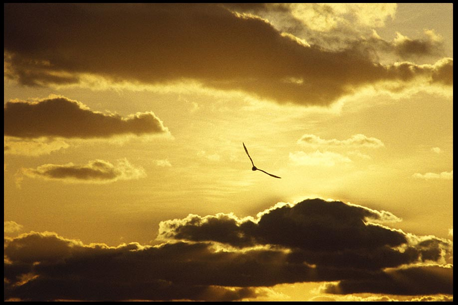 A Seagull flies towards a sunrise with clouds, Melbourne Beach, Florida and John 8:12 bible verse.The light of Christ