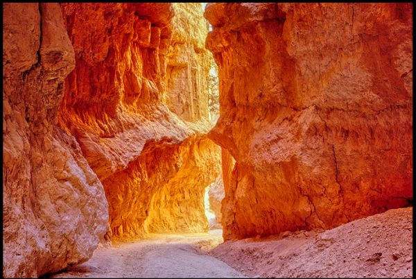 The narrow way through the red walls of Wall Street, Bryce Canyon National Park, Utah and John 12:46 Bible verse light to the World