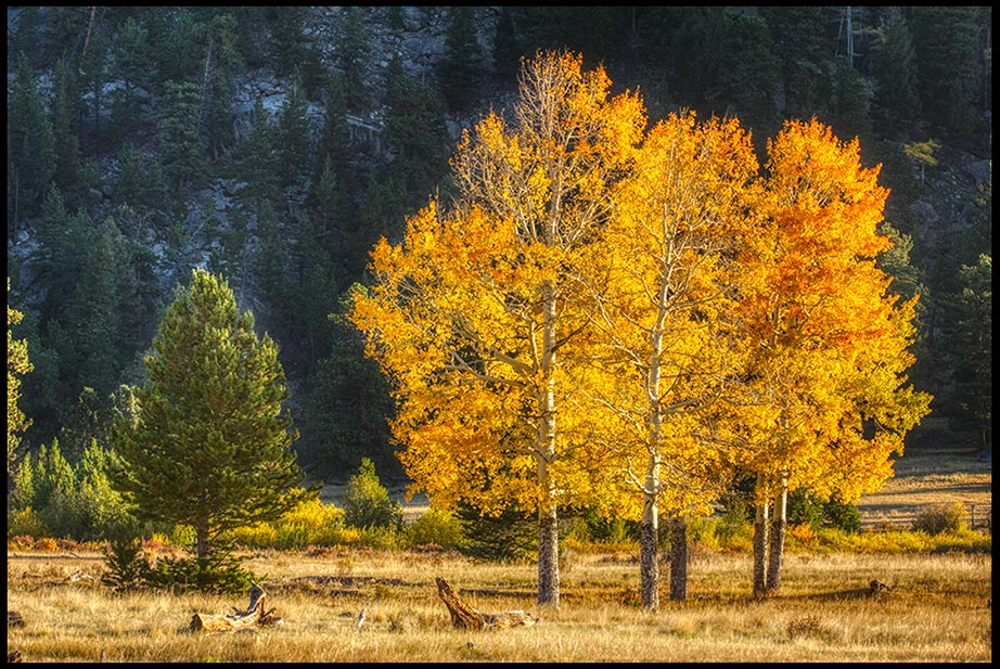 Bright yellow fall aspen trees, Rocky Mountain National Park, Colorado and Psalm 66:3-4, Bible verse on How awesome God is.