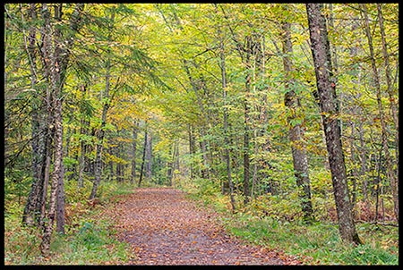 Leave covered trail through woods in early fall. May God lead us down a path to spiritual revival.
