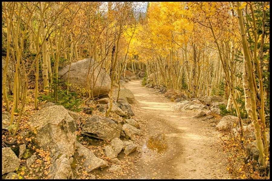 The Mills Lake Trail winds through fall aspen trees on, Rocky Mountain National Park, Colorado and John 10:9-10. Enter through Christ