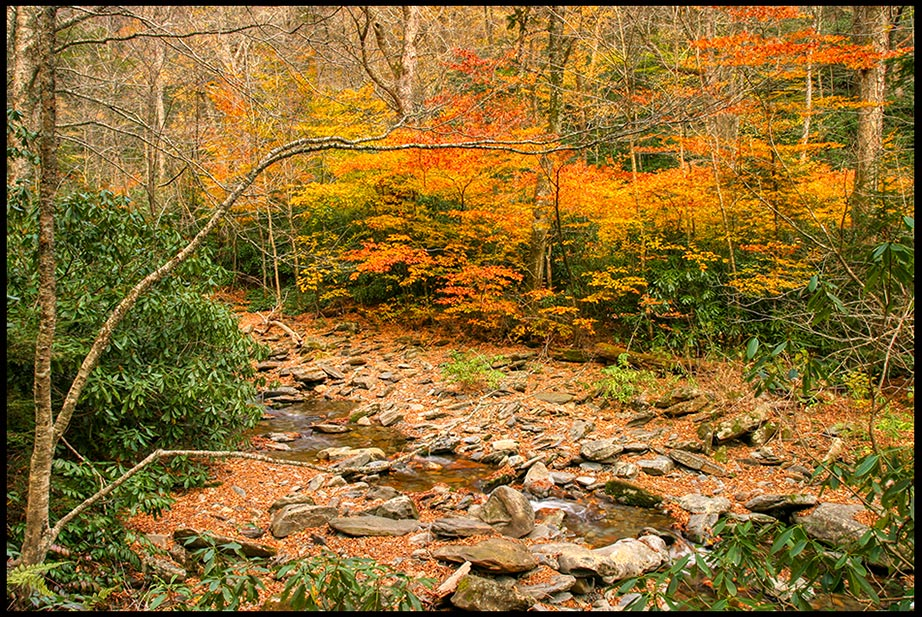 Stream and autumn orange and red displayed on trees, Great Smoky Mountains National Park, Tennessee and Revelation 4:11 God is worthy