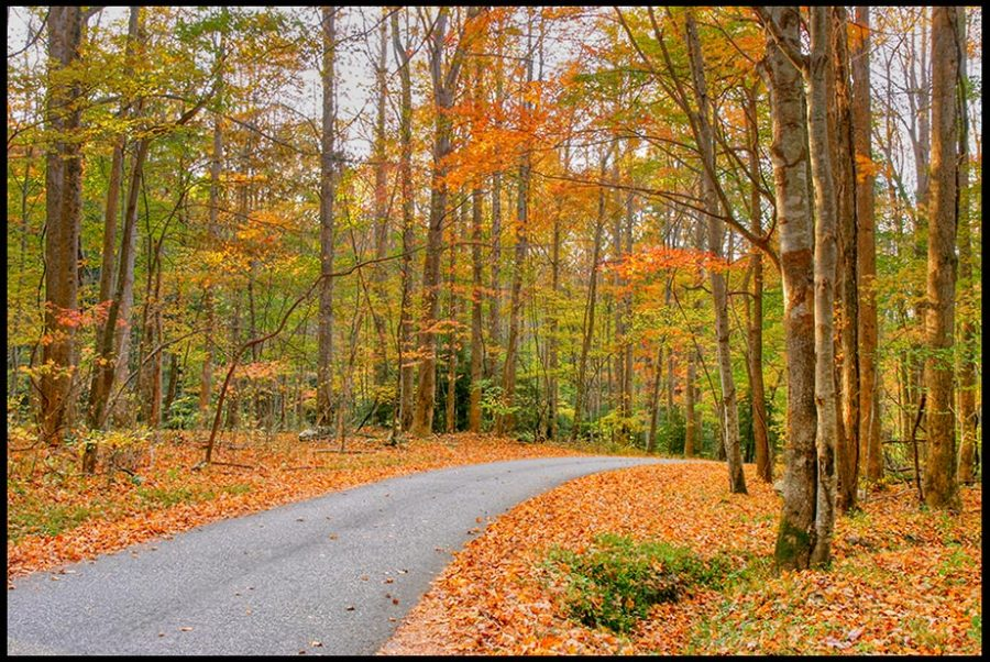 Roaring Fork Motor Nature Trail through fall leaves and trees, Great Smoky Mountains National Park, Tennessee and Psalm 25:4-5 Guide me in your paths, Lord. Bible Verse of the Day