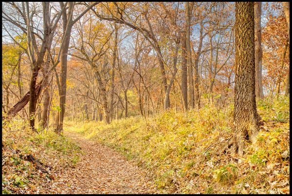 A restful path through though mostly bare fall trees still with leaves of autumn color, Fontenelle Forest, Bellevue, Nebraska. Bible Verse of the Day: Hebrews 4:9-10 a sabbath rest