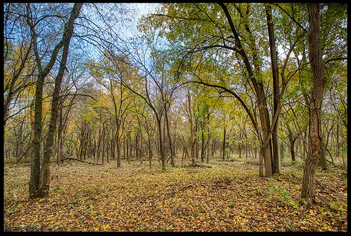 Fall Trees in the woods with most of their leaves on the ground , Fontenelle Forest, Bellevue, Nebraska. Find Simplicity in nature Bible Verse of the Day: Ephesians 4:22-23