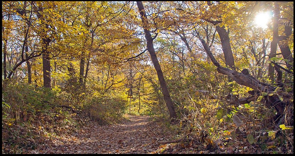 "A trail through fall trees towards a sunrise, Fontenelle Forest, Nebraska. Mark 10:21 and Jesus said, """"follow me."""