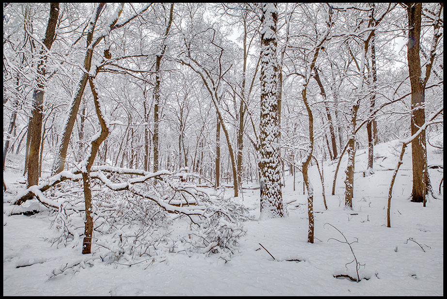 A landscape photo of trees covered in new fallen snow, Fontenelle Forest, Bellevue, Nebraska. Bible Verse of the Day 1 Kings 19:12-13 God's still small voice