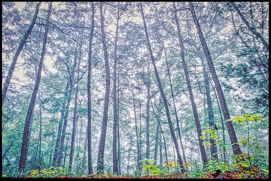 Looking at tall trees in fog, Near Asheville, North Carolina and 2 Corinthians 4:17-18. focus on things eternal.