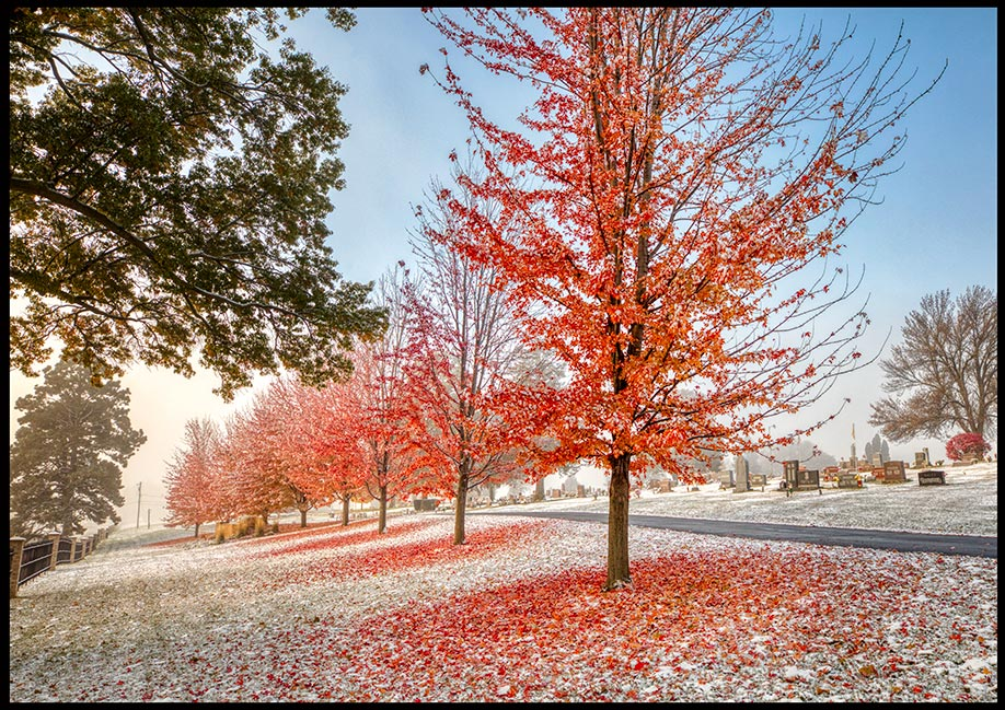 Red Maple trees with some fallen leaves on the ground with light snow in St. John's Cemetery, Bellevue, Nebraska. Bible Verse of the Day: 1 Corinthians 15:51-52 and the resurrection of the dead