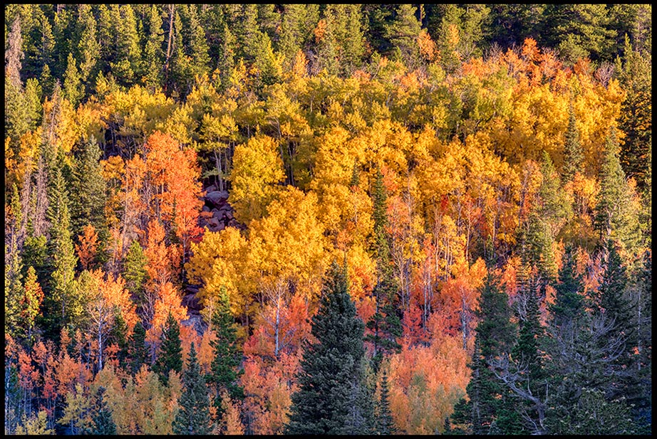 Yellow and red fall aspen tree colors near Bear Lake, Rocky Mountain National Park, Colorado. Bible Verse of the Day: 2 Timothy 4:7-8 crown of righteousness