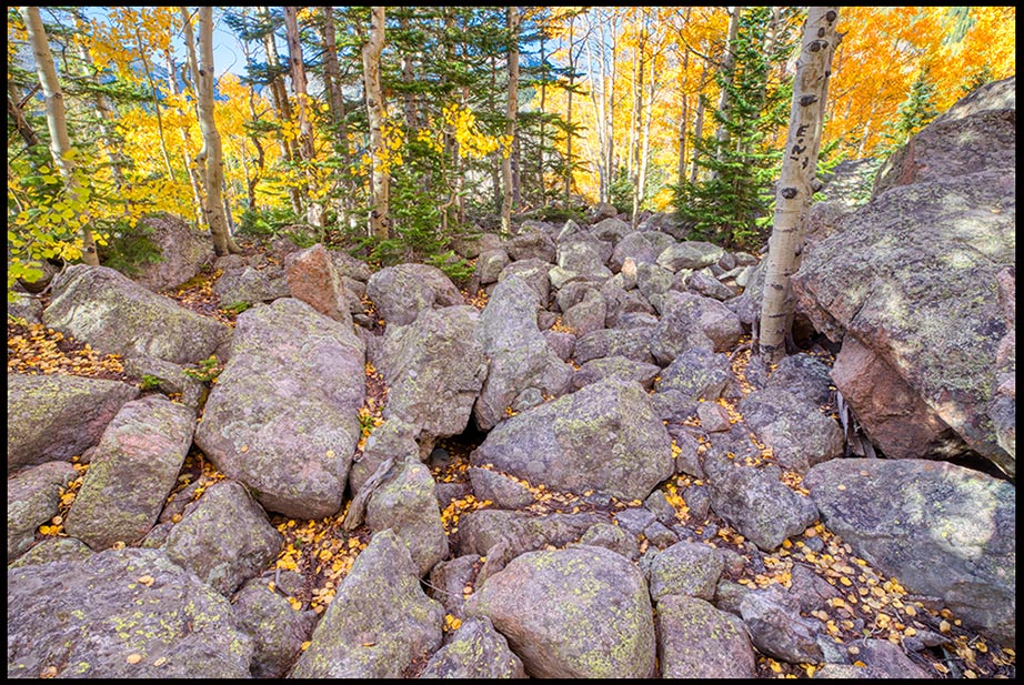 "Aspen trees Growing among the rocks with yellow fall leaves pon the ground, Rocky Mountain National Park, Colorado. Visual Bible Verse of the Day: Matthew 13 ""Other seeds fell on the rocky places"