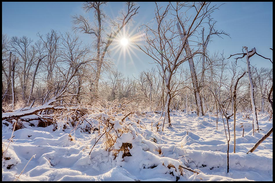 Snow and frost covered trees beneath the sun and a bright blue sky, Fontenelle Forest, Bellevue, Nebraska.Bible Verse of the Day: Ephesians 2:6-7 and Heavenly realms