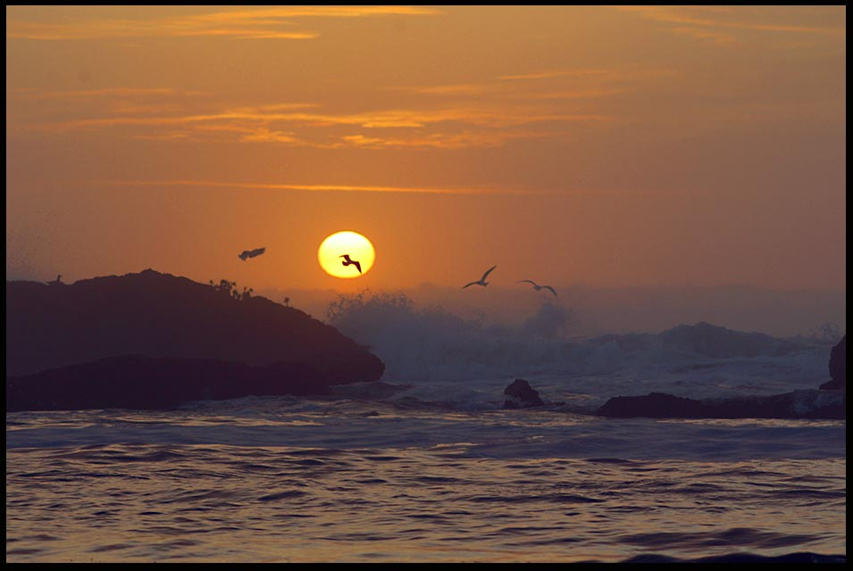 Seagulls dance in the red glow of Sunset, Seal Beach, Oregon. assurance of things hoped for Bible Hebrews 11:1