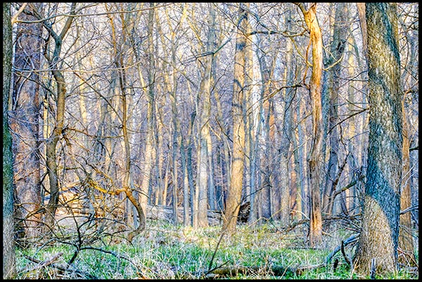 Spring in Fontenelle Forest in Bellevue, Nebraska. Set free your anxiety outside during covid-19