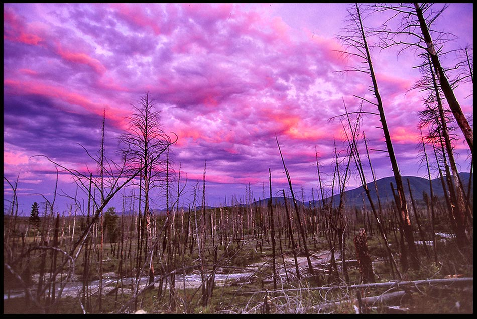 A brilliant magenta post sunset sky and clouds in a burned out area in Glacier National Park, Montana from 1988 fire. Bible Verse of the Day: Joel 2:29-30 , Wonders in the heavens