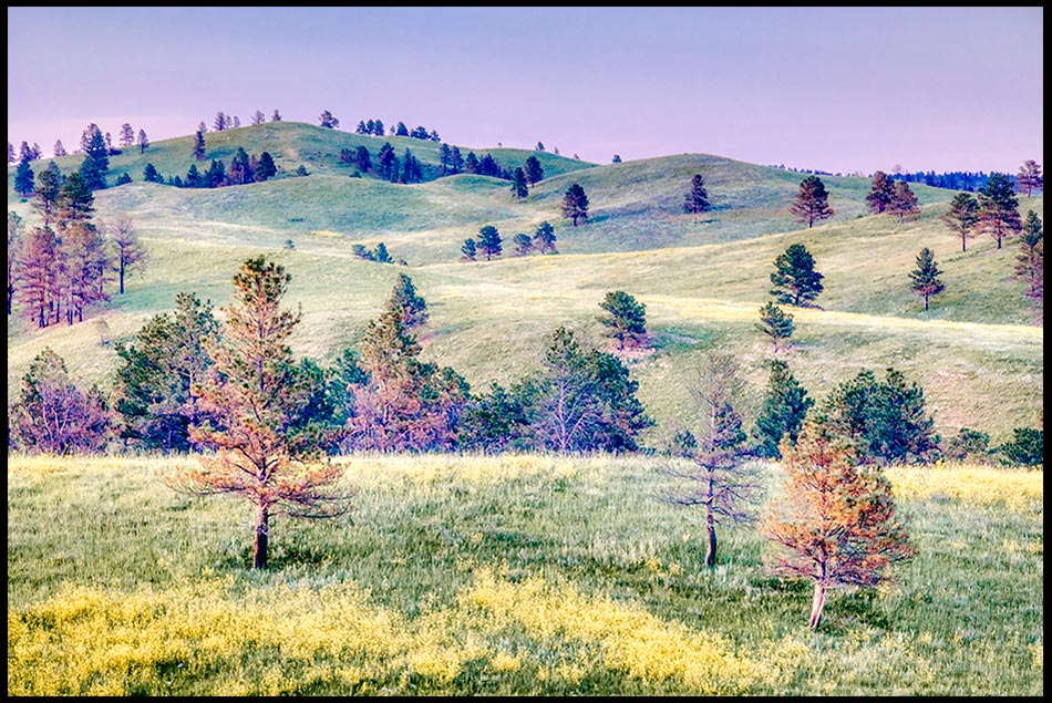 Peaceful rolling prairie hills of Custer State Park in South Dakota sparsely covered with pine trees, South Dakota. Bible Verse of the Day: Psalm 72:3-4 and the Messiah's Peace