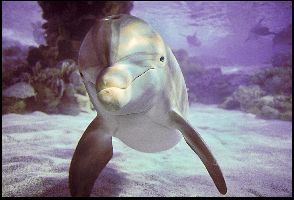 The face of a Atlantic bottlenose dolphin in shallow water and Genesis 1:21a Bible Verse and nature of the Day: And under the sea